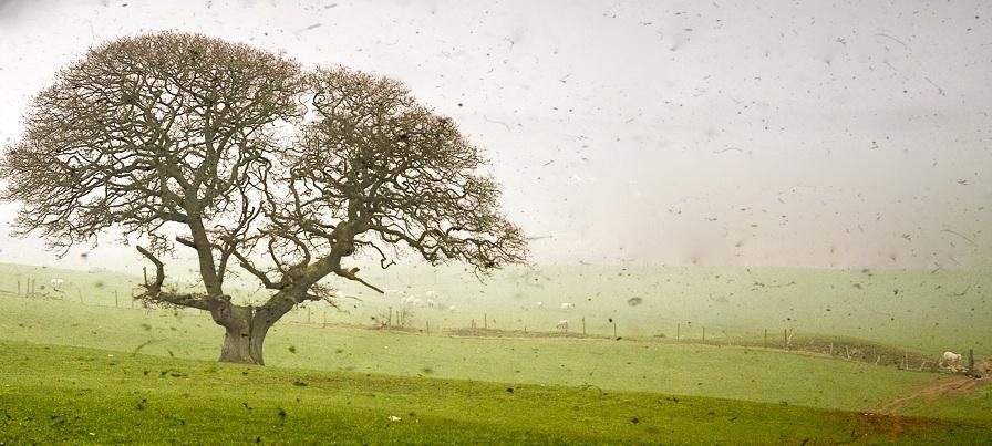 flipped tree